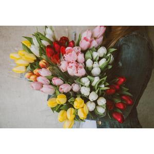 フリー写真, 人と花, 植物, 花, チューリップ, 花束
