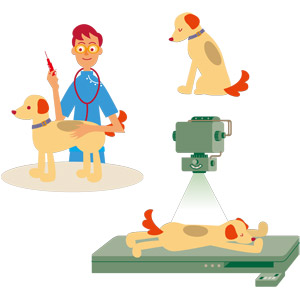 フリーイラスト, ベクター画像, EPS, 動物, 哺乳類, 犬(イヌ), 人物, 男性, 仕事, 職業, 獣医, レントゲン