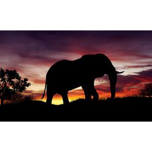 フリーイラスト, 動物, 哺乳類, 象(ゾウ), シルエット(動物), 夕暮れ(夕方), 夕焼け