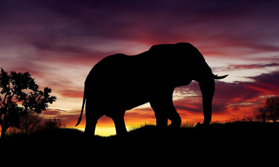 フリーイラスト 夕陽とゾウのシルエット
