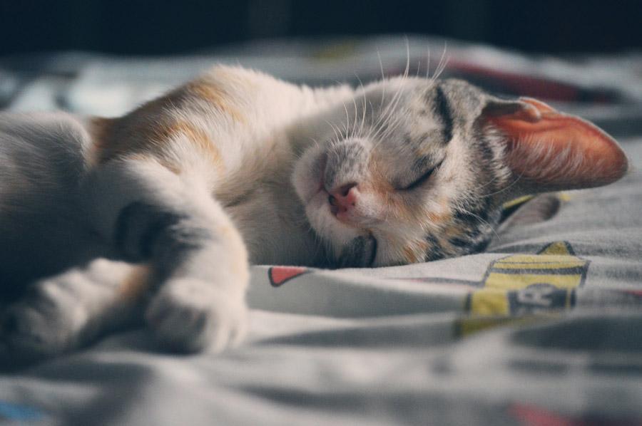 フリー写真 かわいい寝顔の子猫