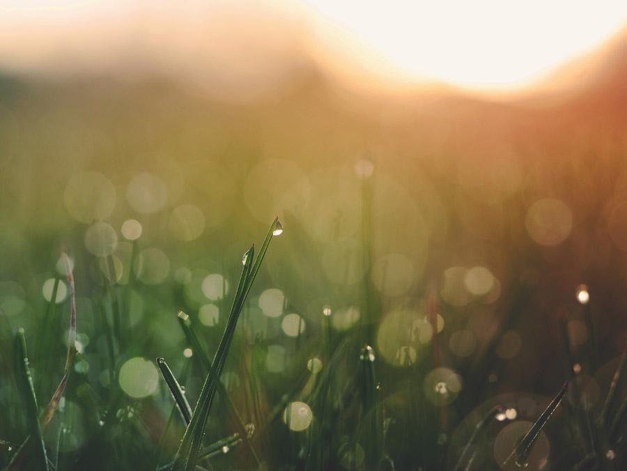 フリー写真 水滴の付いた草と朝日の風景