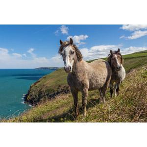 フリー写真, 動物, 哺乳類, 馬(ウマ), 海