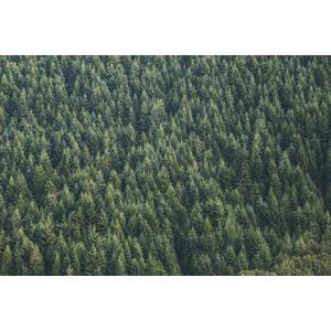 フリー写真, 風景, 自然, 森林, 樹木, 緑色(グリーン)