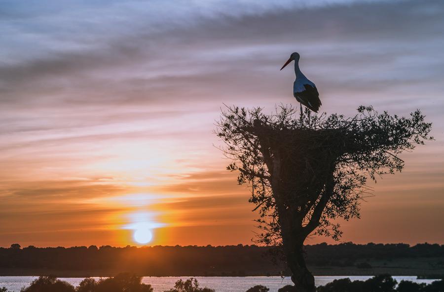 フリー写真 夕日と巣の上のコウノトリ