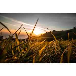フリー写真, 風景, 自然, 夕暮れ(夕方), 夕焼け, 夕日, 植物, 雑草, 草むら
