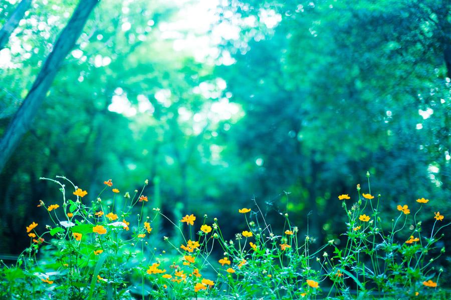 フリー写真 森の木々と小花