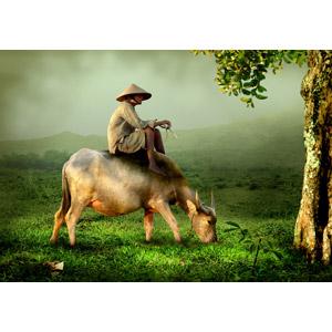 フリー写真, 人物, インドネシア人, 農家(農民), 人と動物, 動物, 哺乳類, 牛(ウシ), 水牛(スイギュウ), 食べる(動物), 人と風景, 霧(霞)