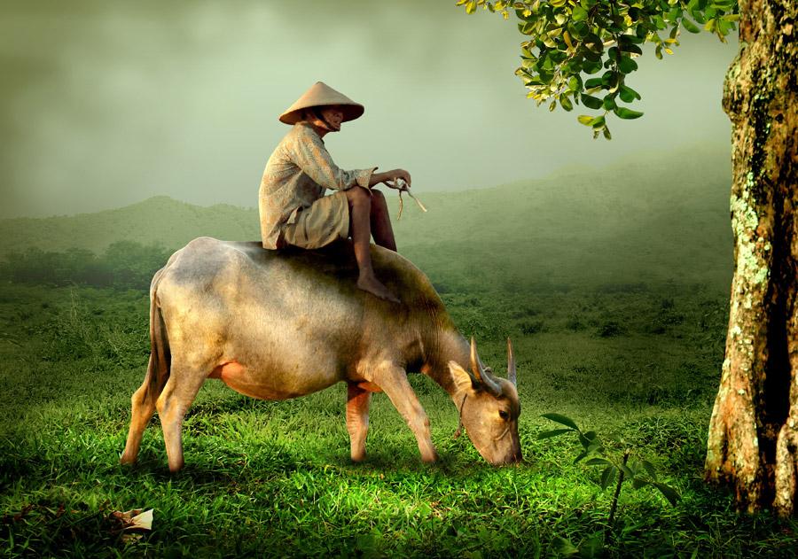 フリー写真 水牛の上に乗るインドネシアの農民
