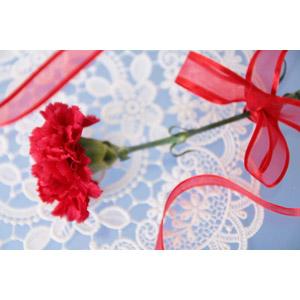 フリー写真, 植物, 花, カーネーション, 年中行事, 母の日, 5月, リボン, ラッピングリボン, プレゼント, レース編み