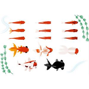 フリーイラスト, ベクター画像, AI, 動物, 魚類, 魚(サカナ), 金魚(キンギョ), 夏, 出目金(デメキン)