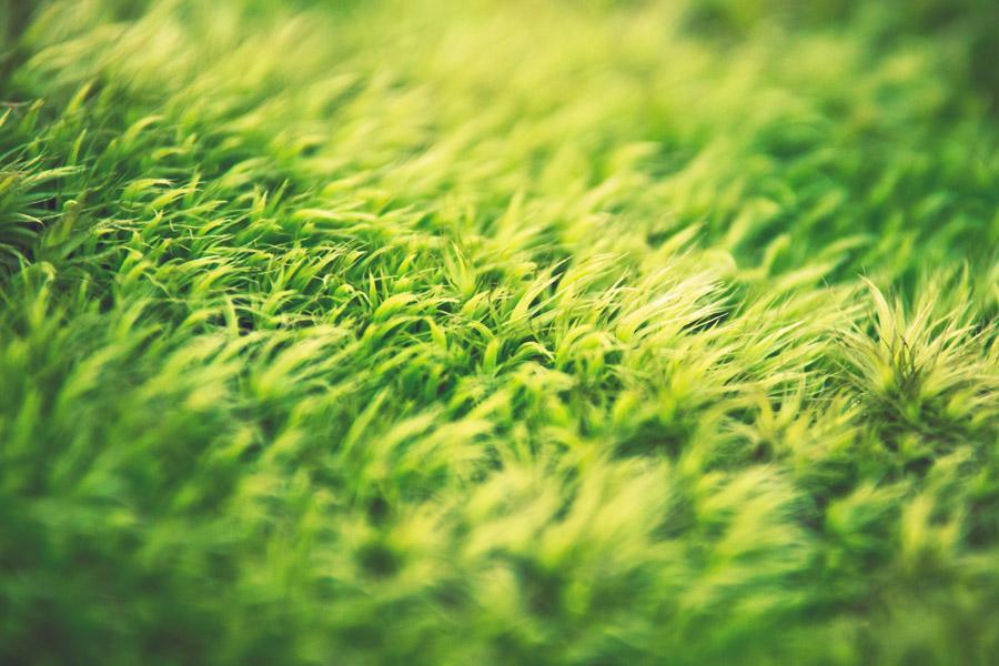 フリー写真 緑色の草