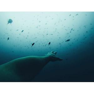 フリー写真, 人体, 手, 手を伸ばす, 海, 水中, 魚(サカナ)