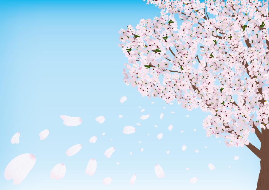 フリーイラスト 満開の桜の木と桜吹雪