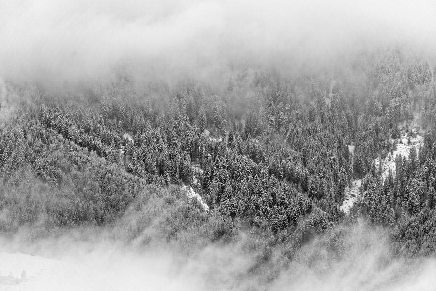 フリー写真 雪と霧に包まれる森