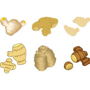 フリーイラスト, ベクター画像, AI, 食べ物(食料), 野菜, 香辛料, 生姜(ショウガ)