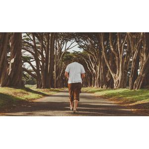 フリー写真, 人物, 男性, 外国人男性, 後ろ姿, 人と風景, 並木道, 樹木