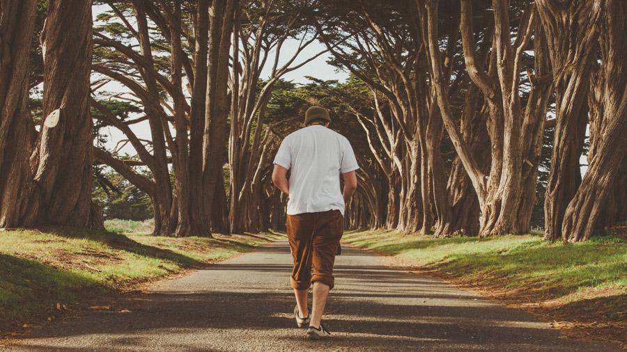 フリー写真 並木道を歩く男性の後ろ姿