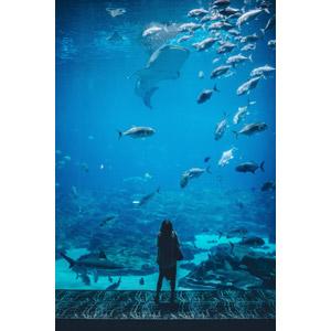フリー写真, 人物, 女性, 外国人女性, 後ろ姿, 人と風景, 人と動物, 水族館, 水槽, 水中, 動物, 魚類, 魚(サカナ), ジンベエザメ