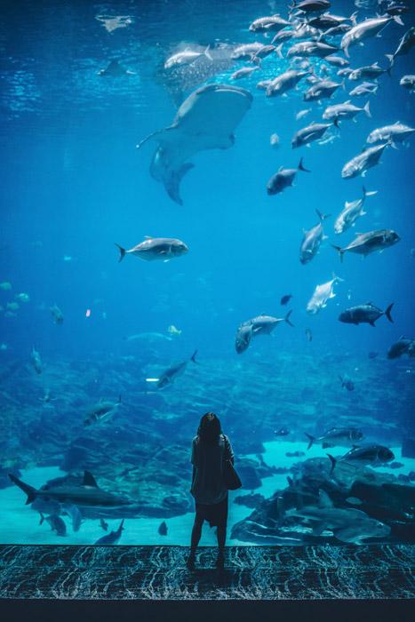 フリー写真 水族館でジンベエザメを見ている女性