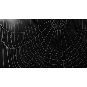 フリー写真, 背景, 水滴(雫), 蜘蛛の巣(クモの巣), 黒背景, 黒色(ブラック)