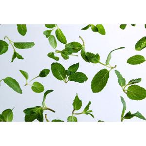 フリー写真, 植物, ハーブ, スペアミント, 葉っぱ