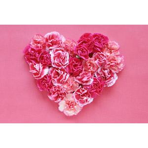 フリー写真, 植物, 花, カーネーション, ピンク色の花, 年中行事, 母の日, 5月, ピンク色, ハート