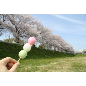 フリー写真, 食べ物(食料), 菓子, 和菓子, 団子(だんご), 花見だんご(三色団子), 花見, 4月, 桜(サクラ), 春