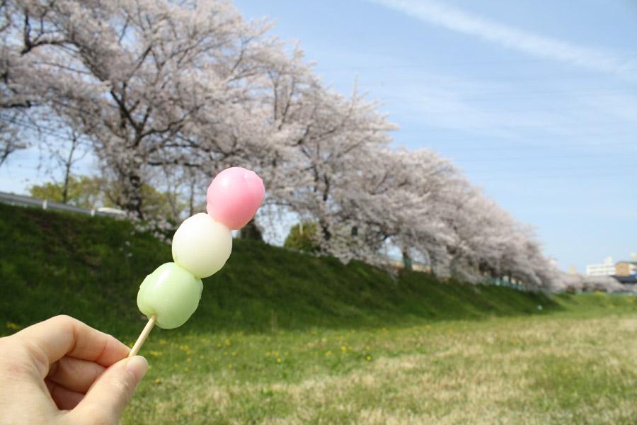 フリー写真 桜並木と花見団子
