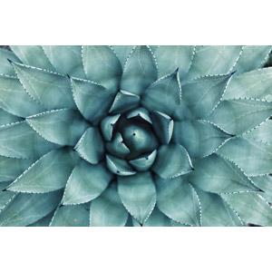 フリー写真, 植物, 多肉植物, サボテン, 緑色(グリーン)