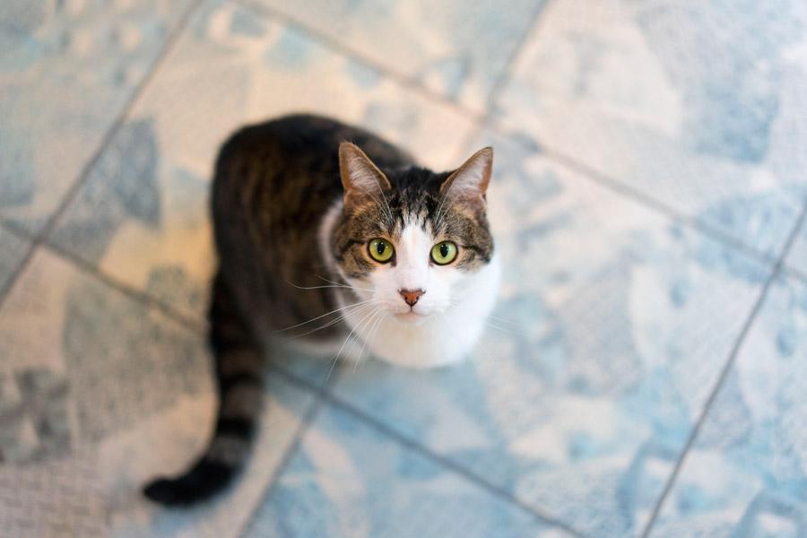 フリー写真 下からこちらを見上げている猫