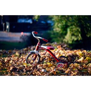 フリー写真, 乗り物, 三輪車, 遊具, 落葉(落ち葉)