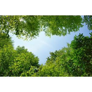 フリー写真, 風景, 自然, 青空, 葉っぱ, 新緑, 樹木