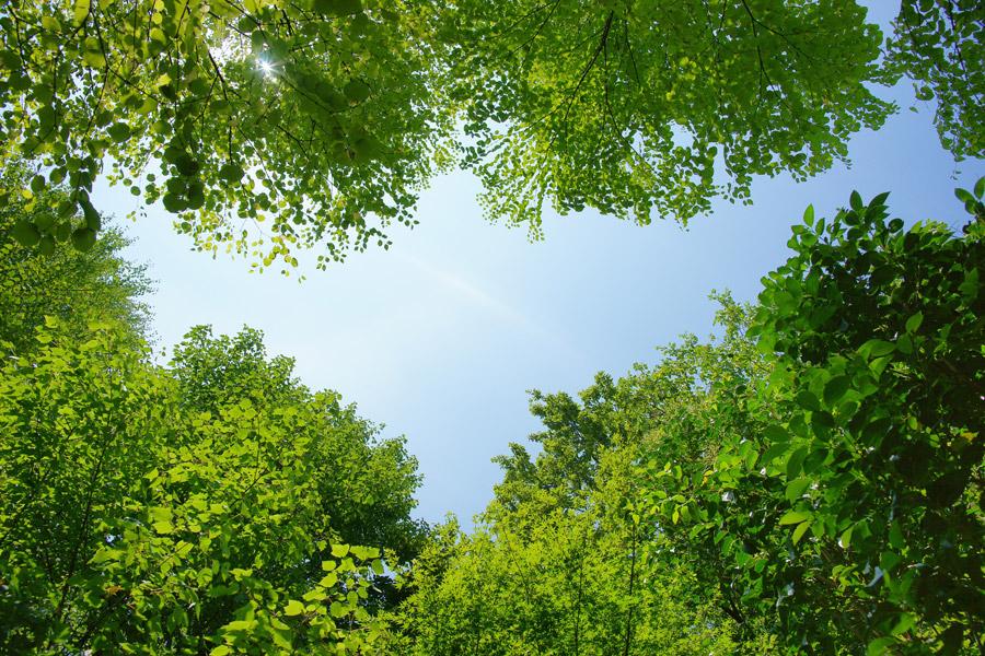 フリー写真 青空と新緑の葉