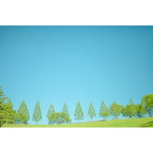 フリー写真, 風景, 空, 青空, 樹木