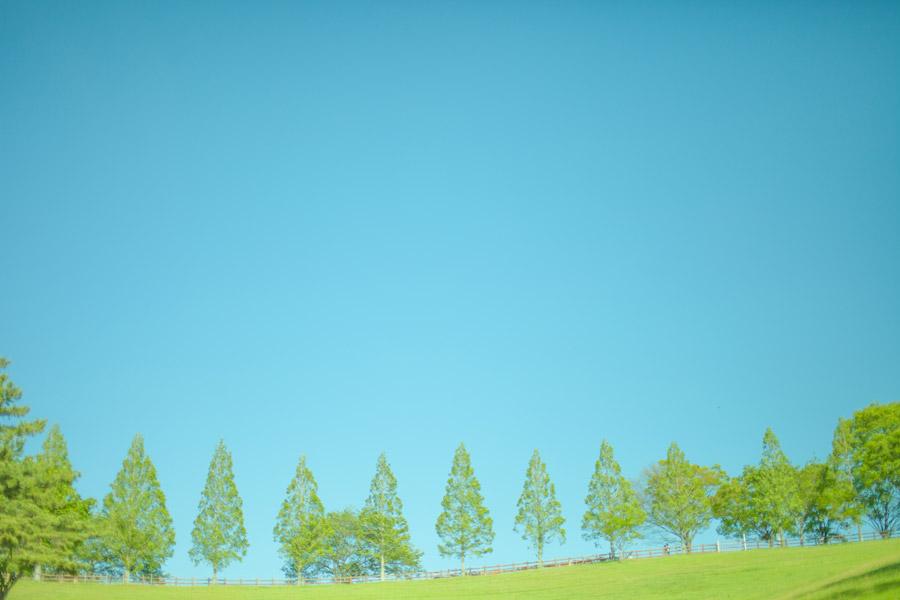 フリー写真 青空と並木の風景