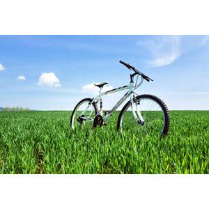 フリー写真, 乗り物, 自転車, マウンテンバイク, 風景, 牧草地, 草原, 植物, 雑草