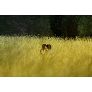 フリー写真, 人物, カップル, 恋人, キス(口づけ), 愛(ラブ), 人と風景, 草むら