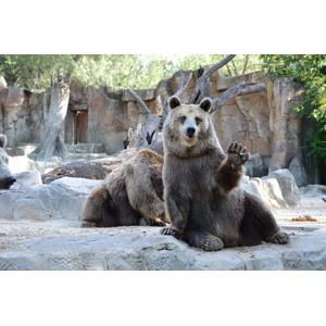 フリー写真, 動物, 哺乳類, 熊(クマ)