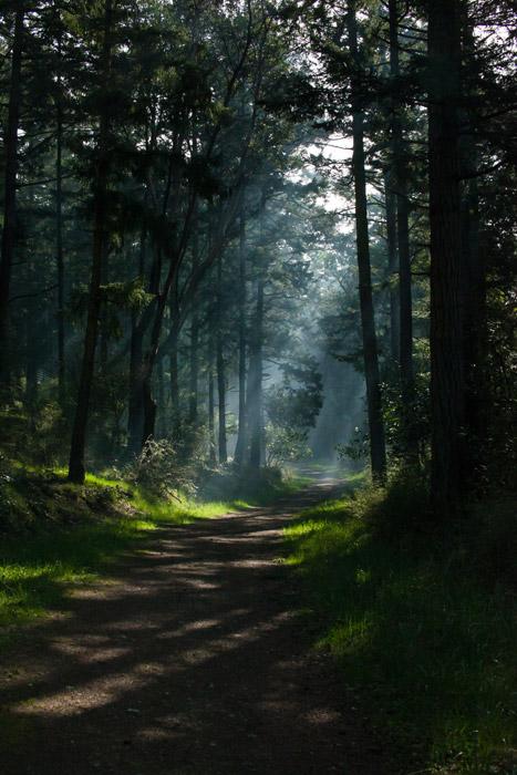 フリー写真 木漏れ日と森の道