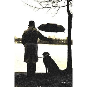 フリー写真, 人物, 後ろ姿, 人と風景, 人と動物, 動物, 哺乳類, 犬(イヌ), 雨, 傘