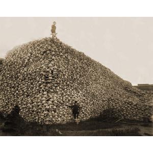 フリー写真, アメリカバイソン, 動物の骨, 人と風景, モノクロ, 狩猟(狩り)