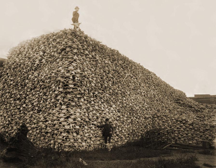 フリー写真 肥料用のアメリカバイソンの頭蓋骨の山