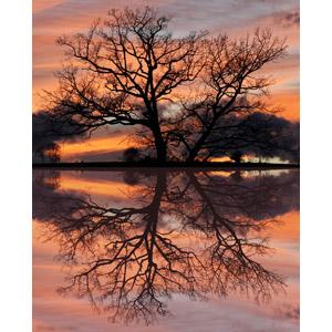 フリー写真, 風景, 夕暮れ(夕方), 夕焼け, 樹木, 湖, 鏡像