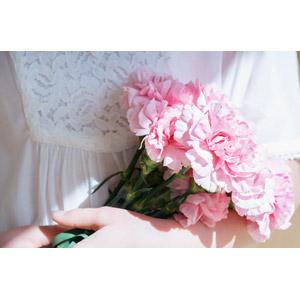 フリー写真, 人と花, 植物, 花, カーネーション, ピンク色の花, 年中行事, 母の日, 5月, 花束