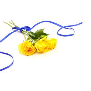 フリー写真, 植物, 花, 薔薇(バラ), 黄色の花, 花束, リボン, 年中行事, 父の日, 6月, 白背景