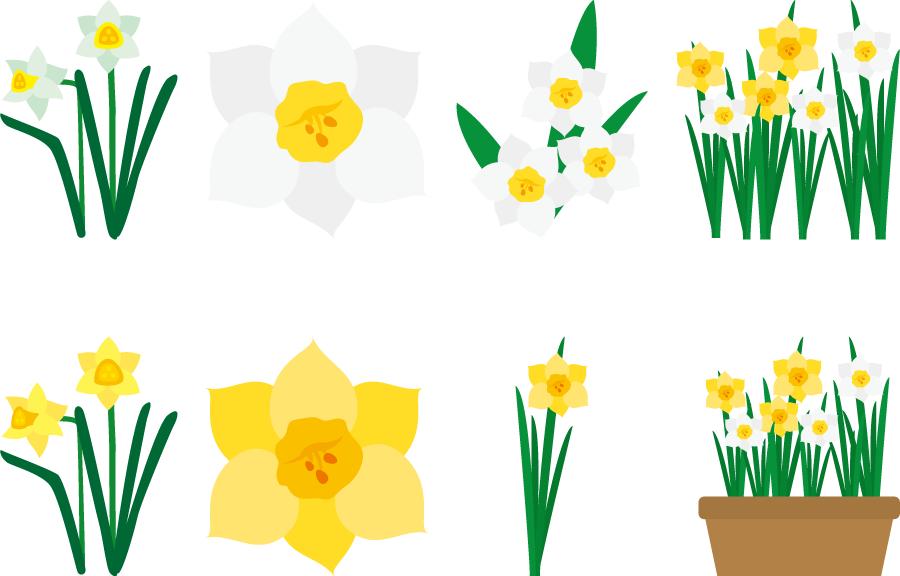 フリーイラスト 8種類のスイセンの花のセット