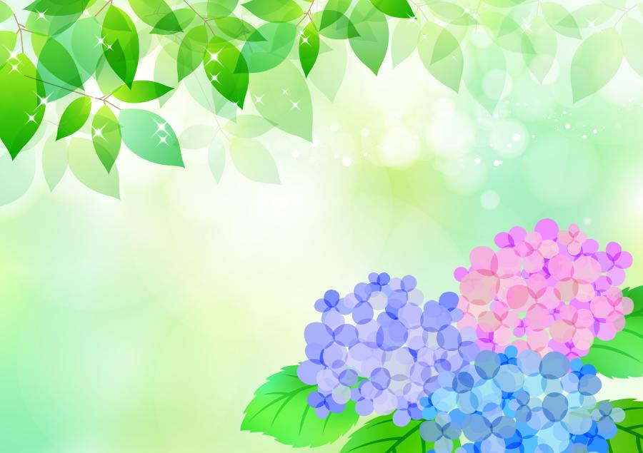 フリーイラスト 新緑の葉とあじさいの花