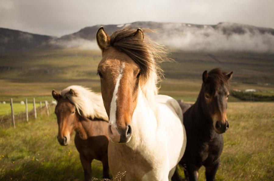 フリー写真 三匹の馬