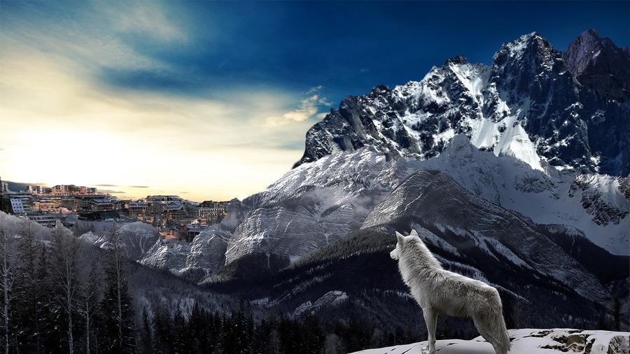 フリー写真 山の上から街を見下ろすオオカミ